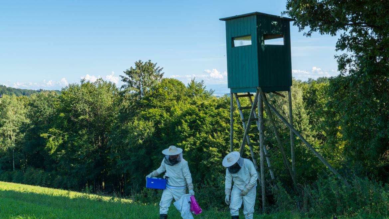 Insekteneinsätze