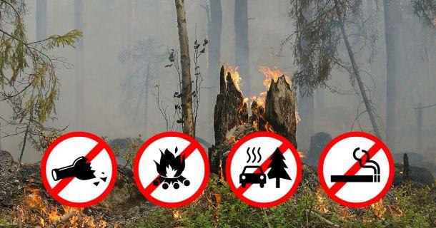 Waldbrand-Gefahr